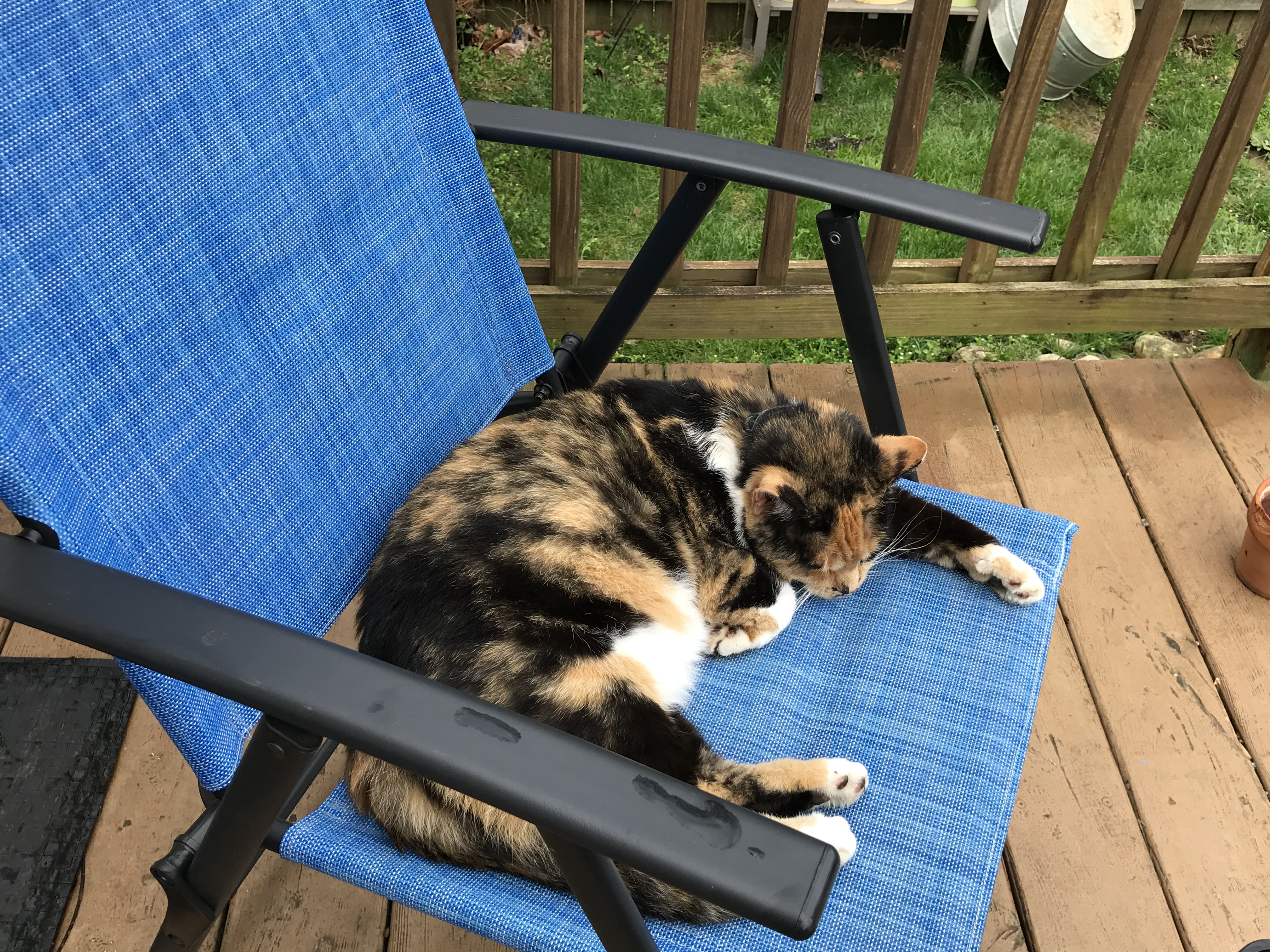 picture of a calico kitty laying on a lawn chair
