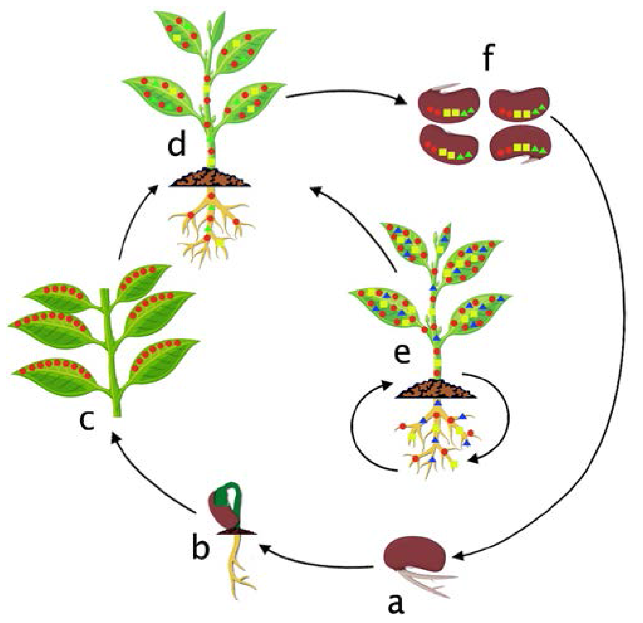 Review: Endophytic microbes and their potential applications in crop management