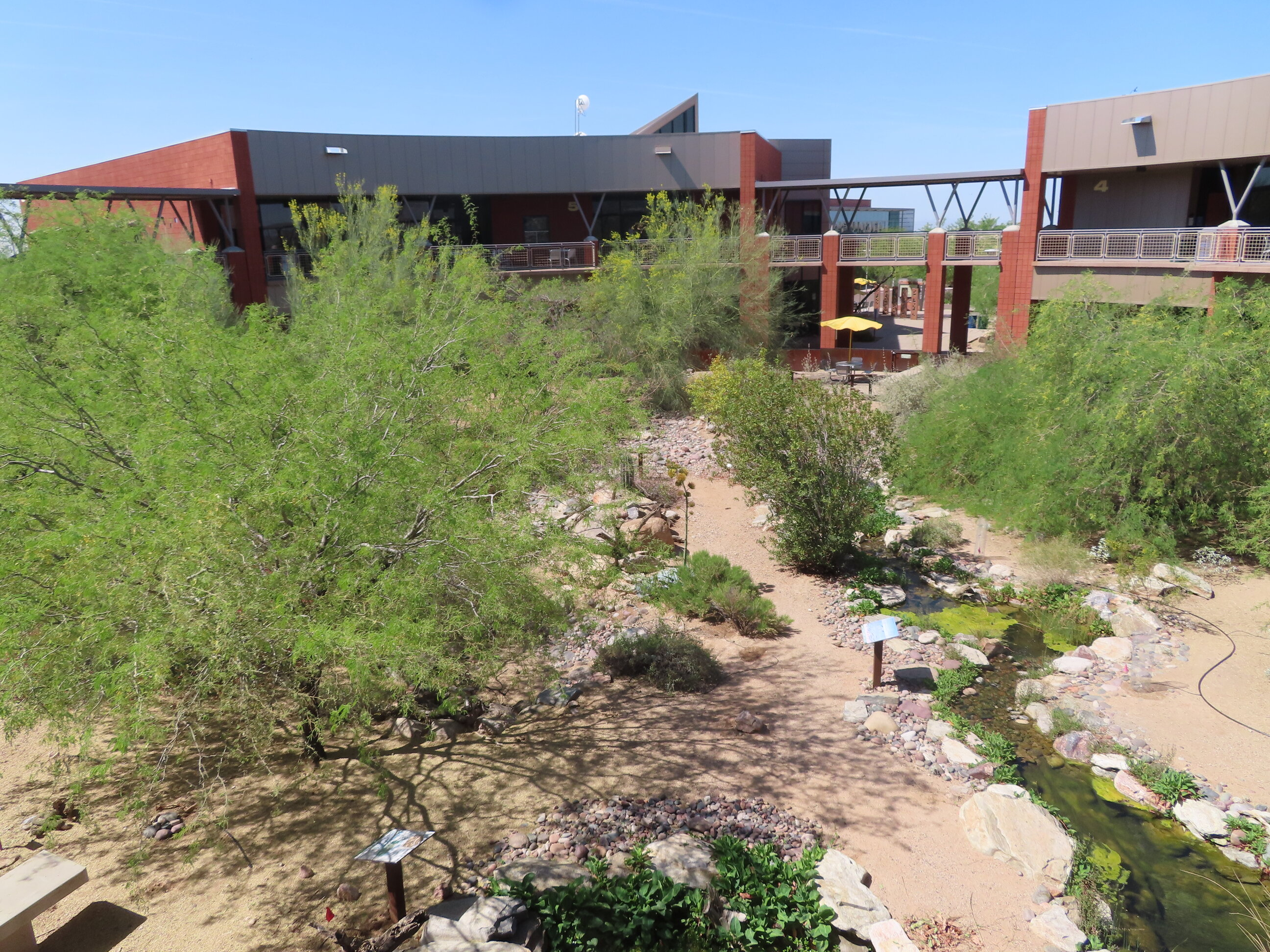 Garden at the Red Mountain campus of MCC