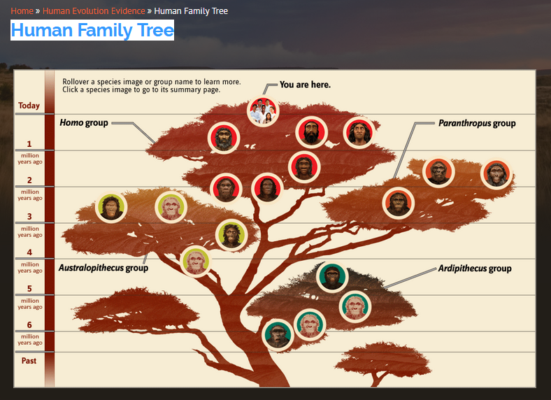 Picture of a human family tree which is found on the Smithsonia website and has embedded link tied to different primates pictured on the graphic