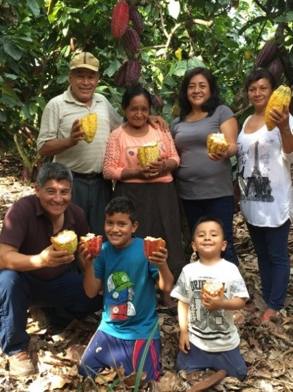 More Farmers in Peru Have Stopped Planting Coca, Opting for Cacao and Coffee