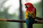 Photo of a parrot by Silas Leupold