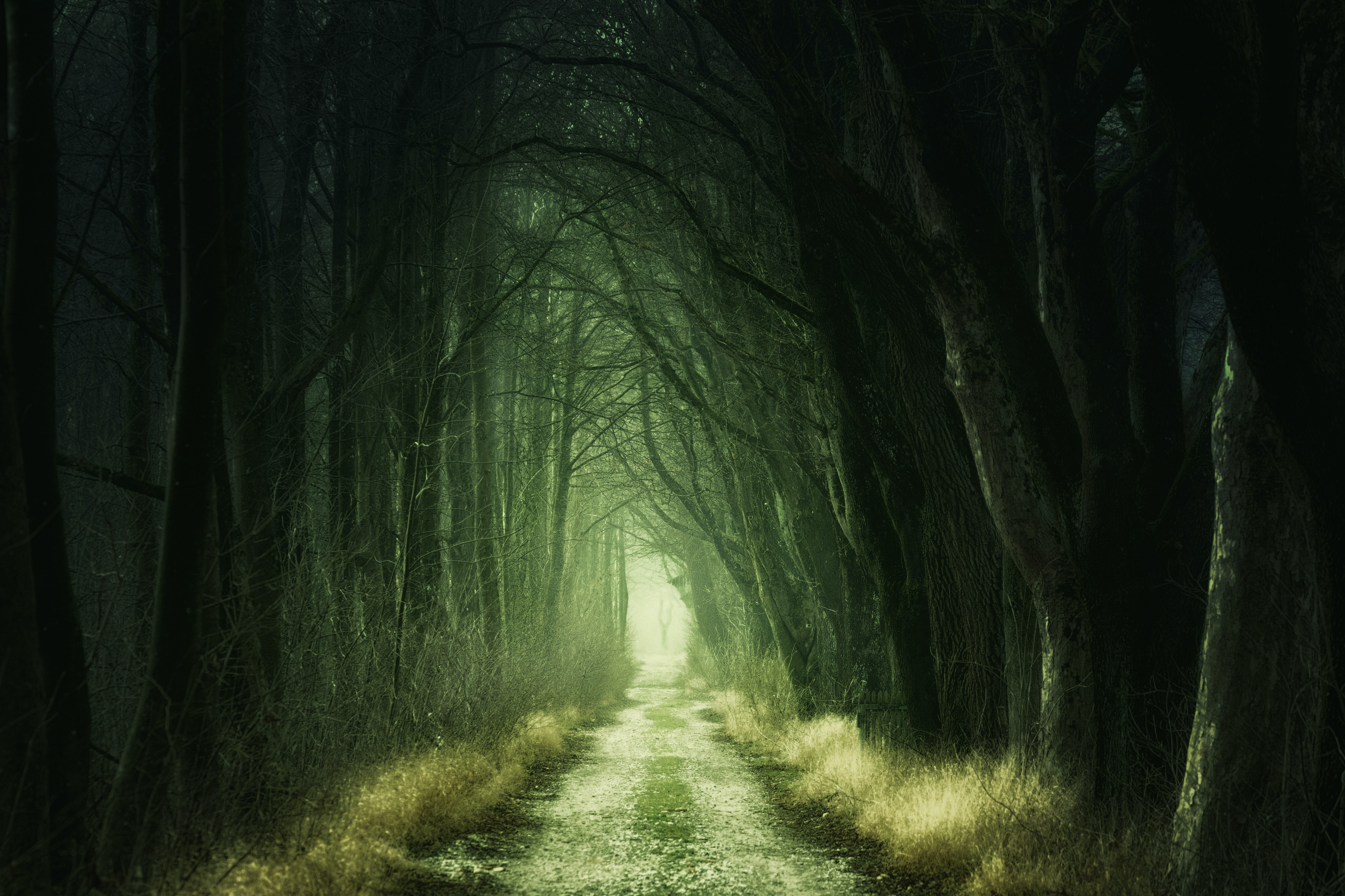 A mysterious and shadowy forest