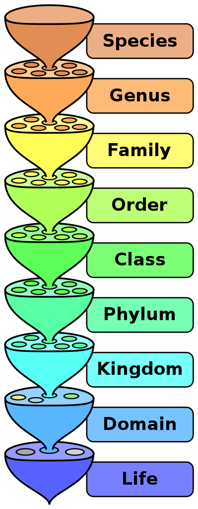 Graphic of biology taxonomy