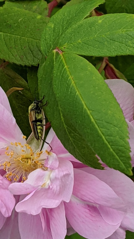 Pollinator and flower on the WSU Pullman Campus