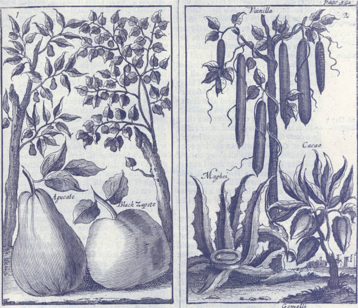 vanilla_plant_archival_image
