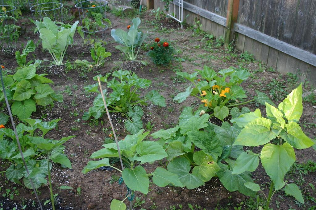 Herbs and flowers growing in garden
