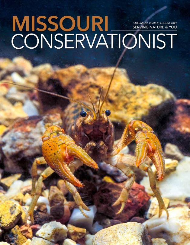 Image of a Woodland Crayfish