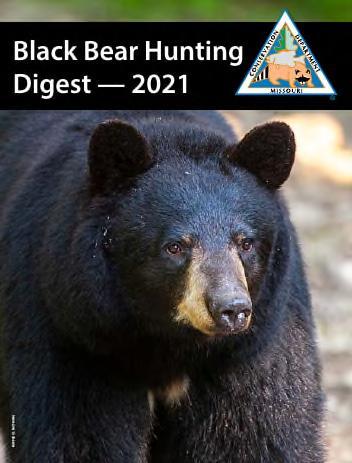 Black Bear cover image
