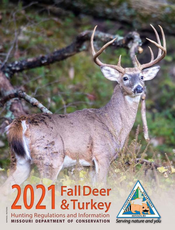 Image of a white tailed buck