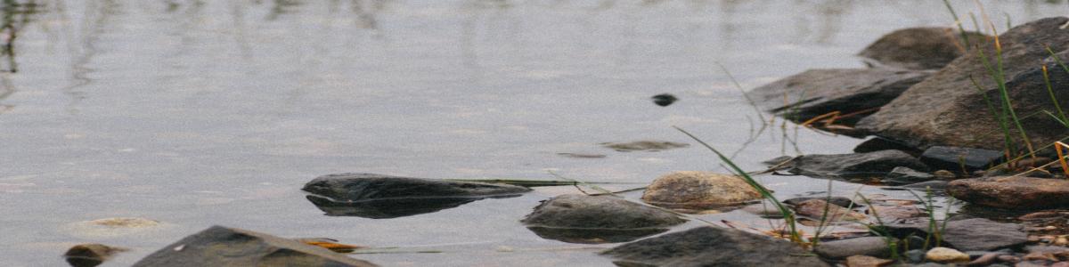 Decretive banner image of water in a creek