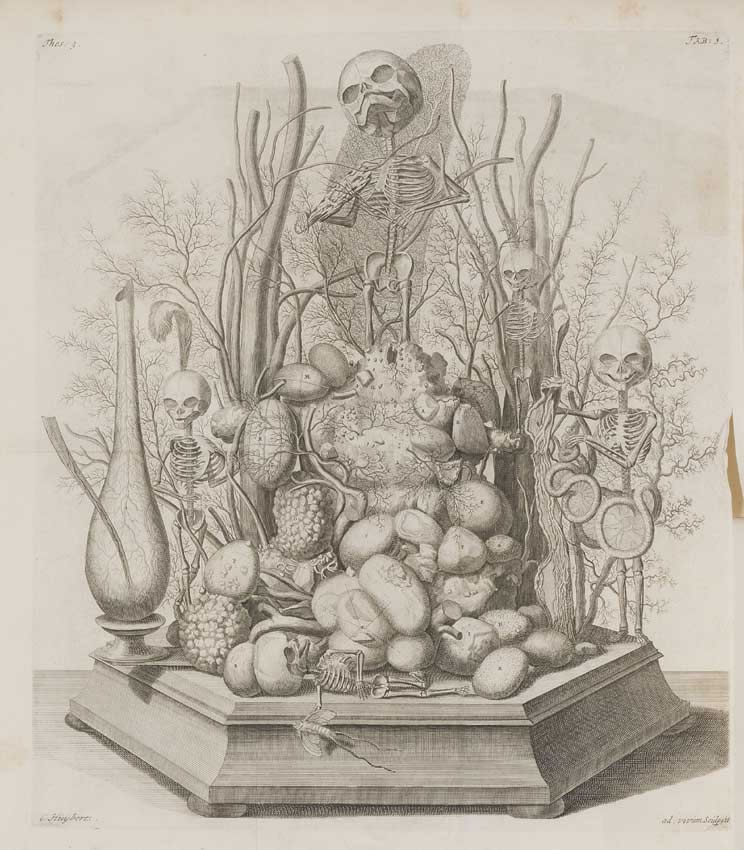 Engraving from: Frederik Ruysch, Opera omnia, Amsterdam 1721. Illustration of a vanitas diorama that Ruysch made. Engraving by Cornelius Huyberts.