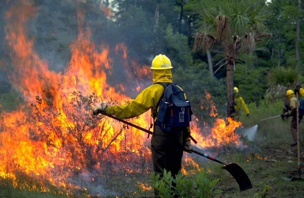 Fire fighter battling a forest fire.