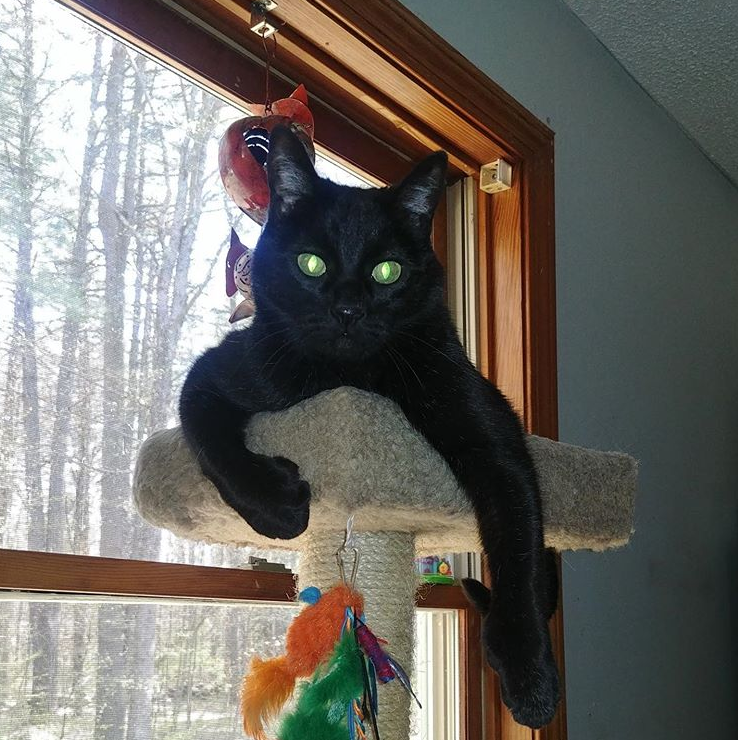 A black cat sitting with his front legs hanging over the edge of a cat tree platform.