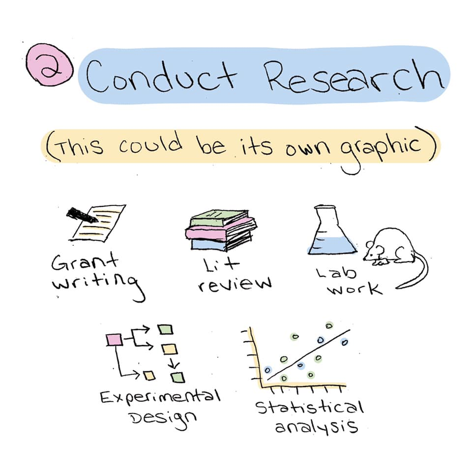 Step 2. Conduct Research (This could be its own graphic)... Grant writing, lit reveiw, lab work, experimental design, statsitical analysis
