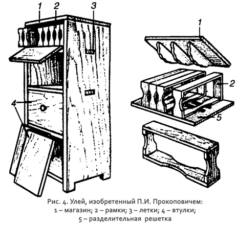 Diagram of Prokopovich's bee hive with frames and shelf-like body.