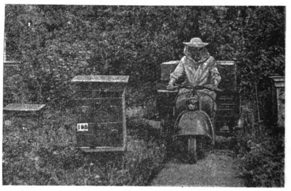 Beekeeper riding motorcycle in apiary