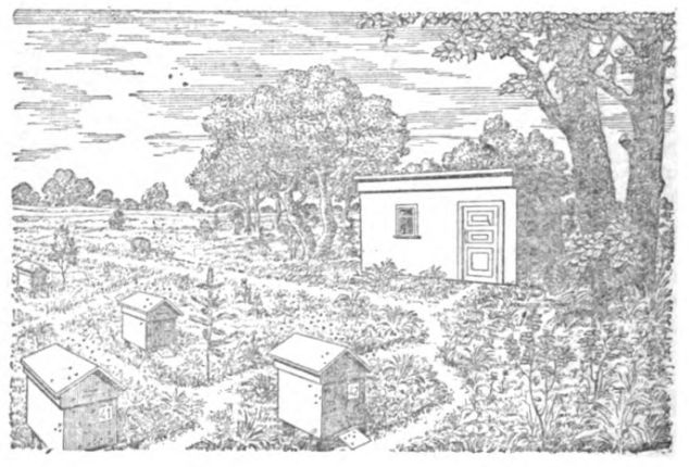 Apiary landscape with hives and hut