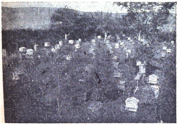 Photo of apiary in Ural mountains