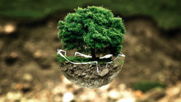 image: tree in bowl