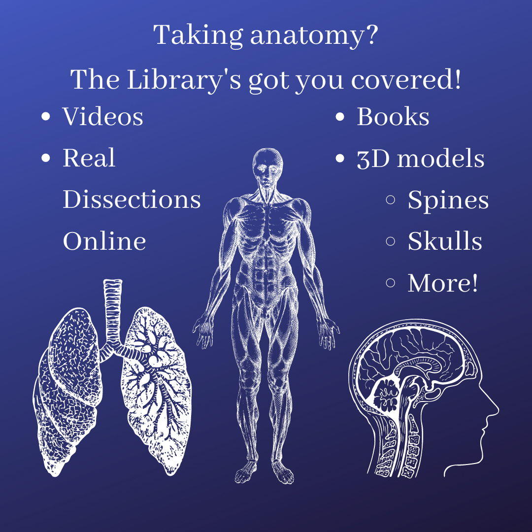 Taking Anatomy? The library's got you covered! Videos, online dissections, books, and 3D models. Click here.