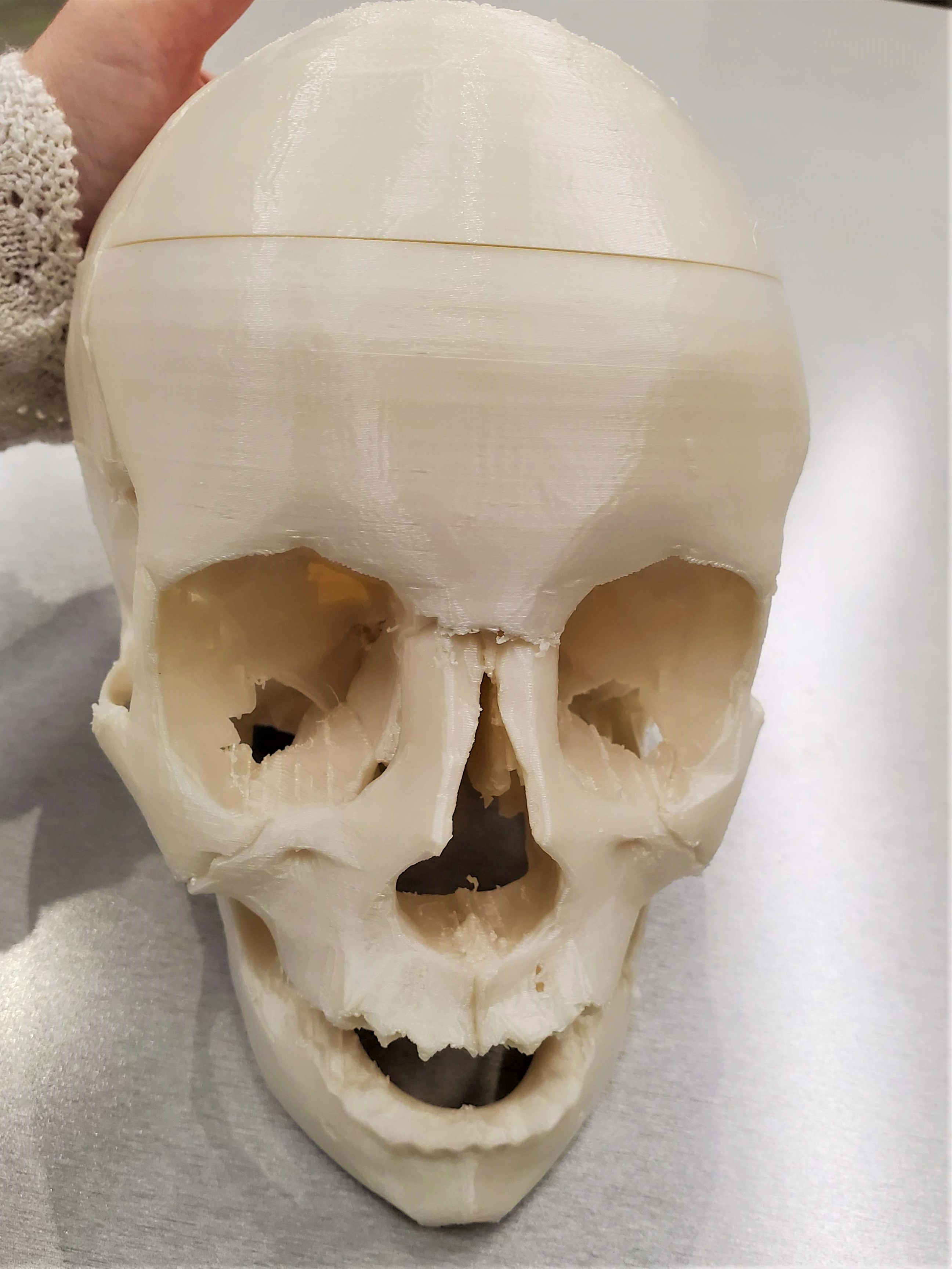 3D printed skull with removable top