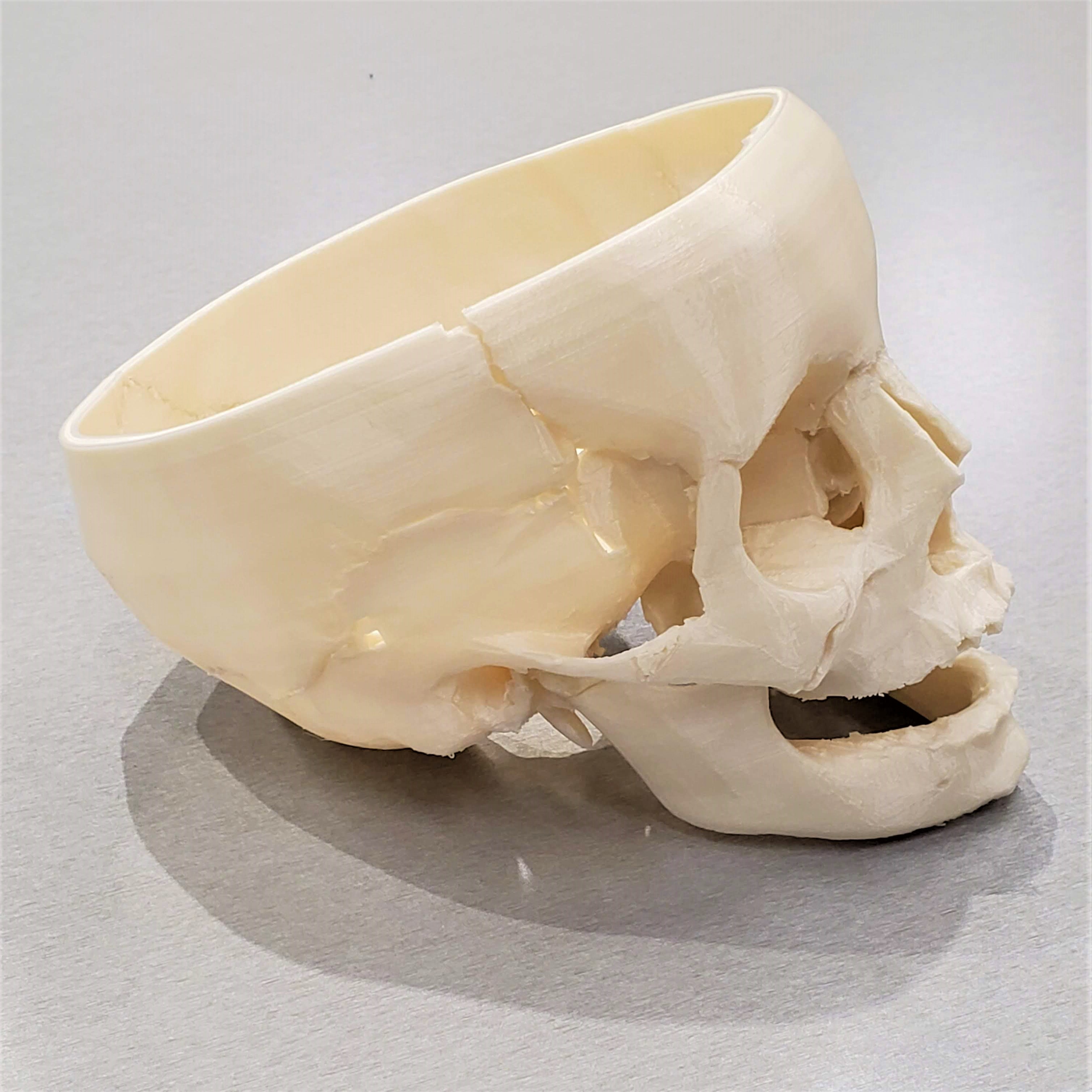 3D printed skull without top