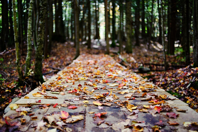 path covered by autumn leaves