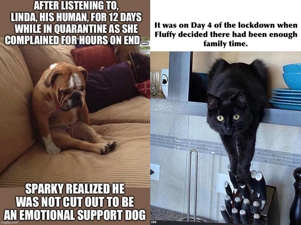 Coronavirus Dog and Cat Memes