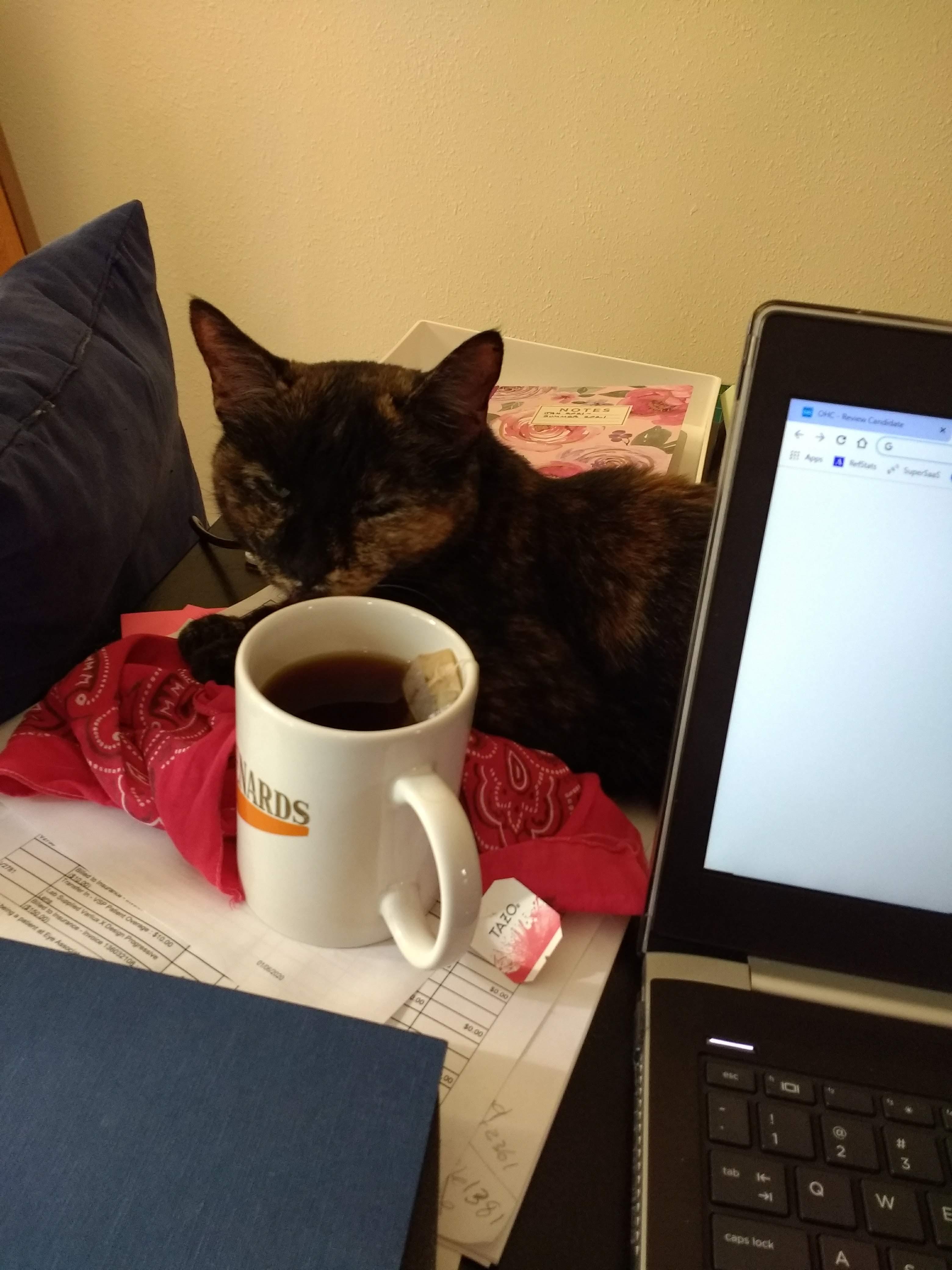 Kate's Cat Caramel