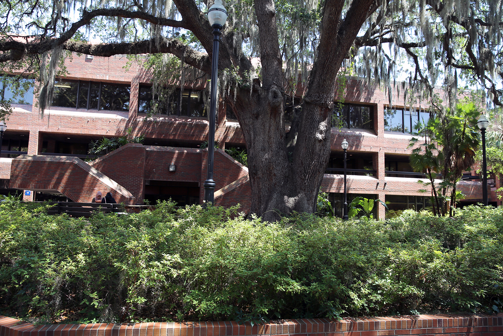 Big Tree in the Courtyard; Education