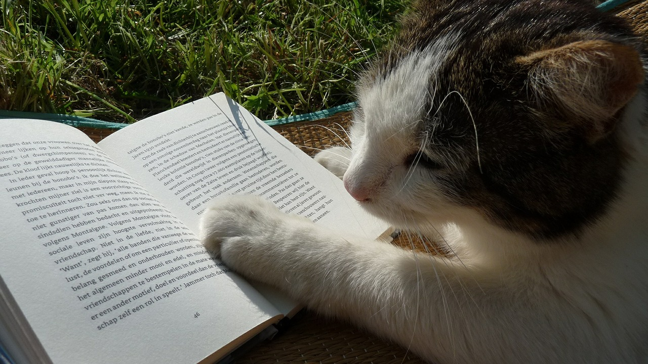 cat reading a book in the grass