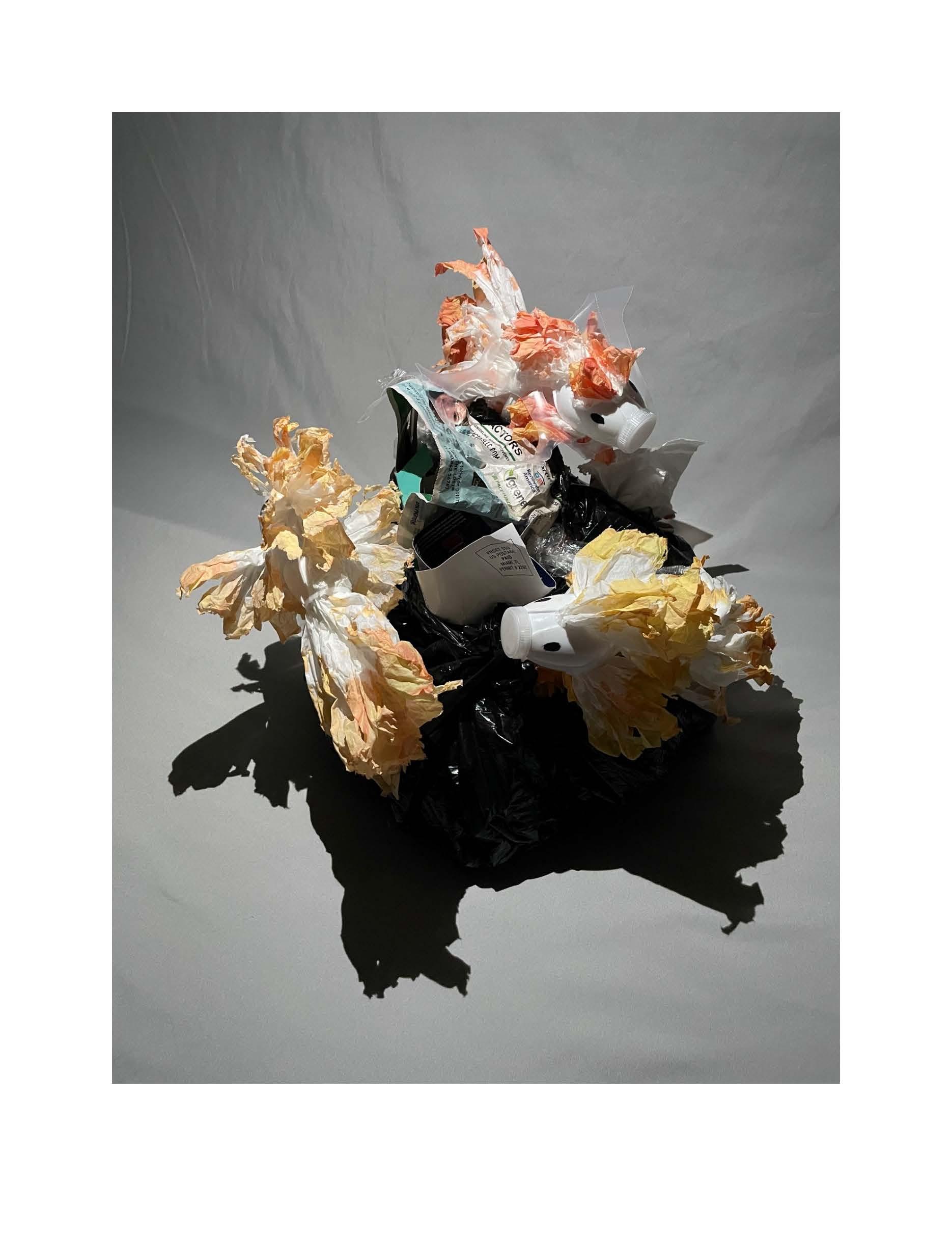 Alejandro Ramos Project, Image 2