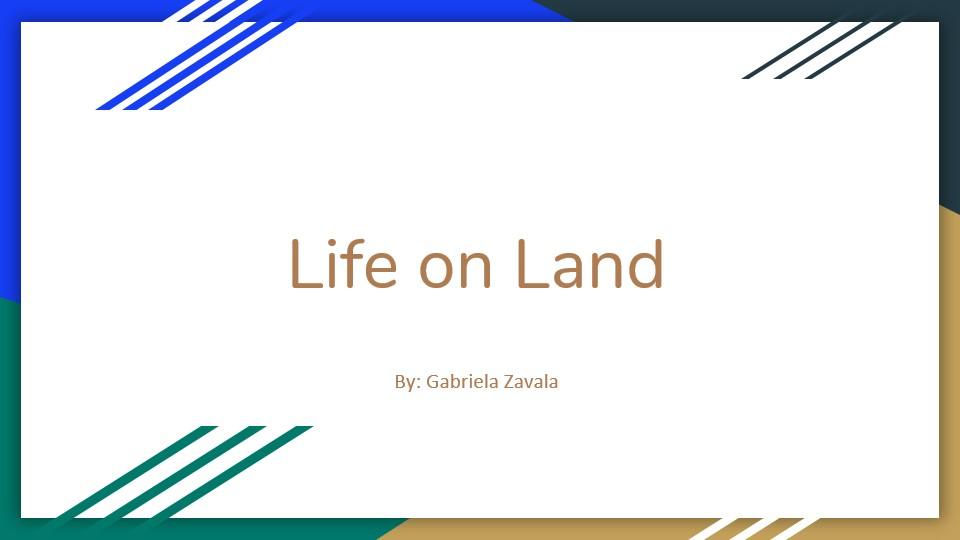 Life on Land by Gabriela Zavala