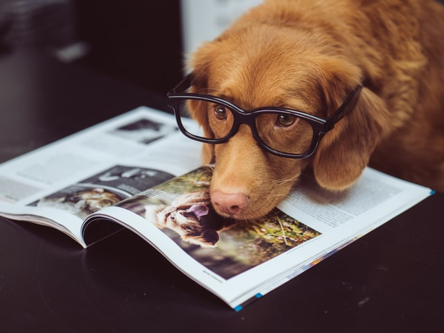Photograph of dog reading book