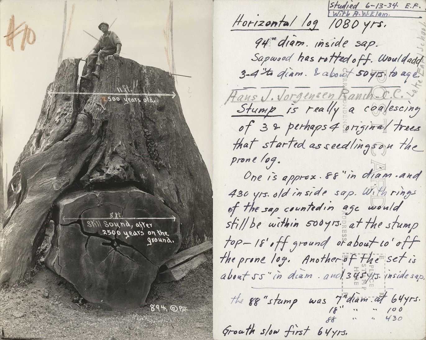 Postcard of tree stumps, recto and verso, with Emanuel Fritz's notes