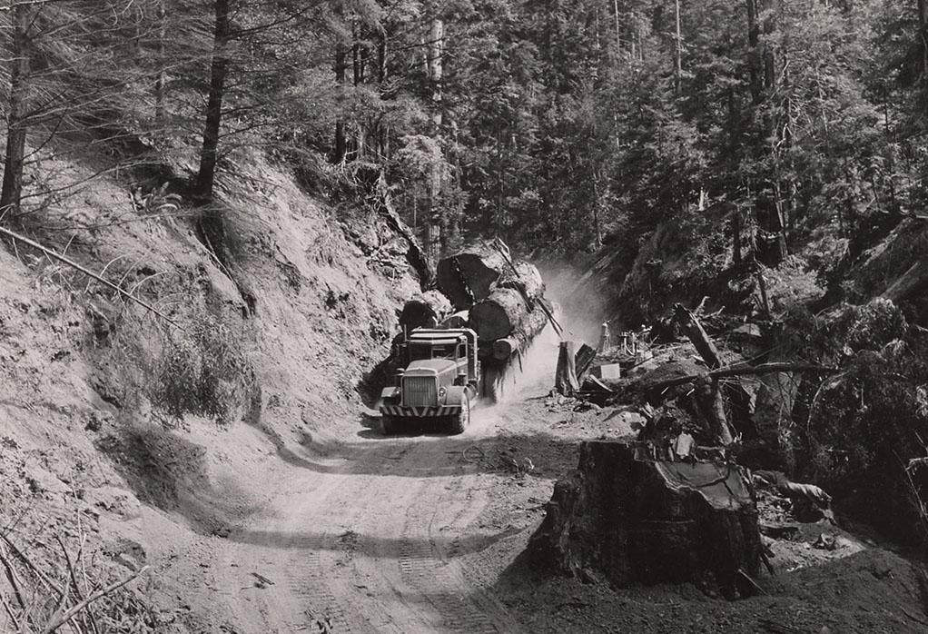 Logging truck carrying a load of redwood logs