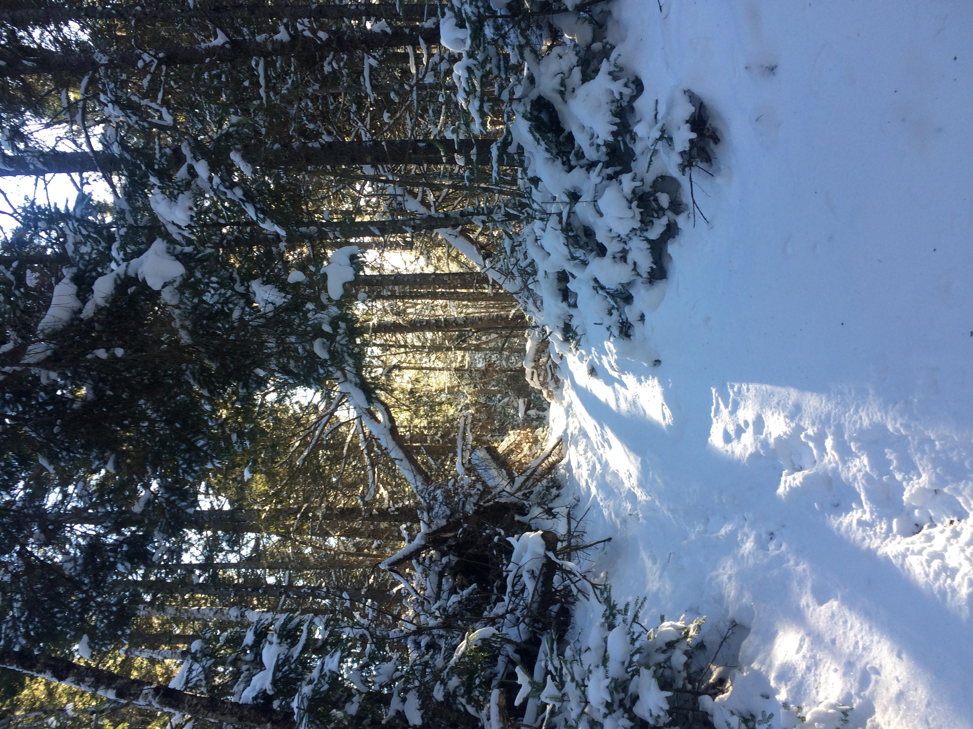 Winter Hiking Challenge