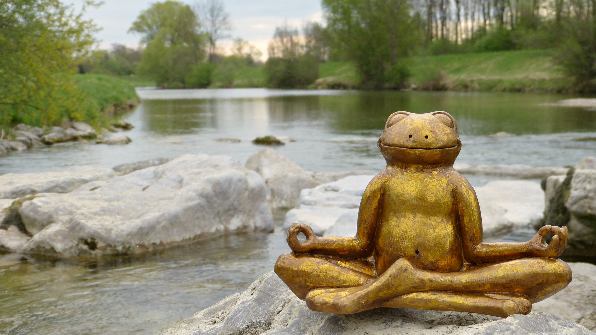 water and frog meditating