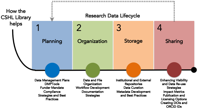 How the CSHL Library Helps through the Research Data Lifecycle