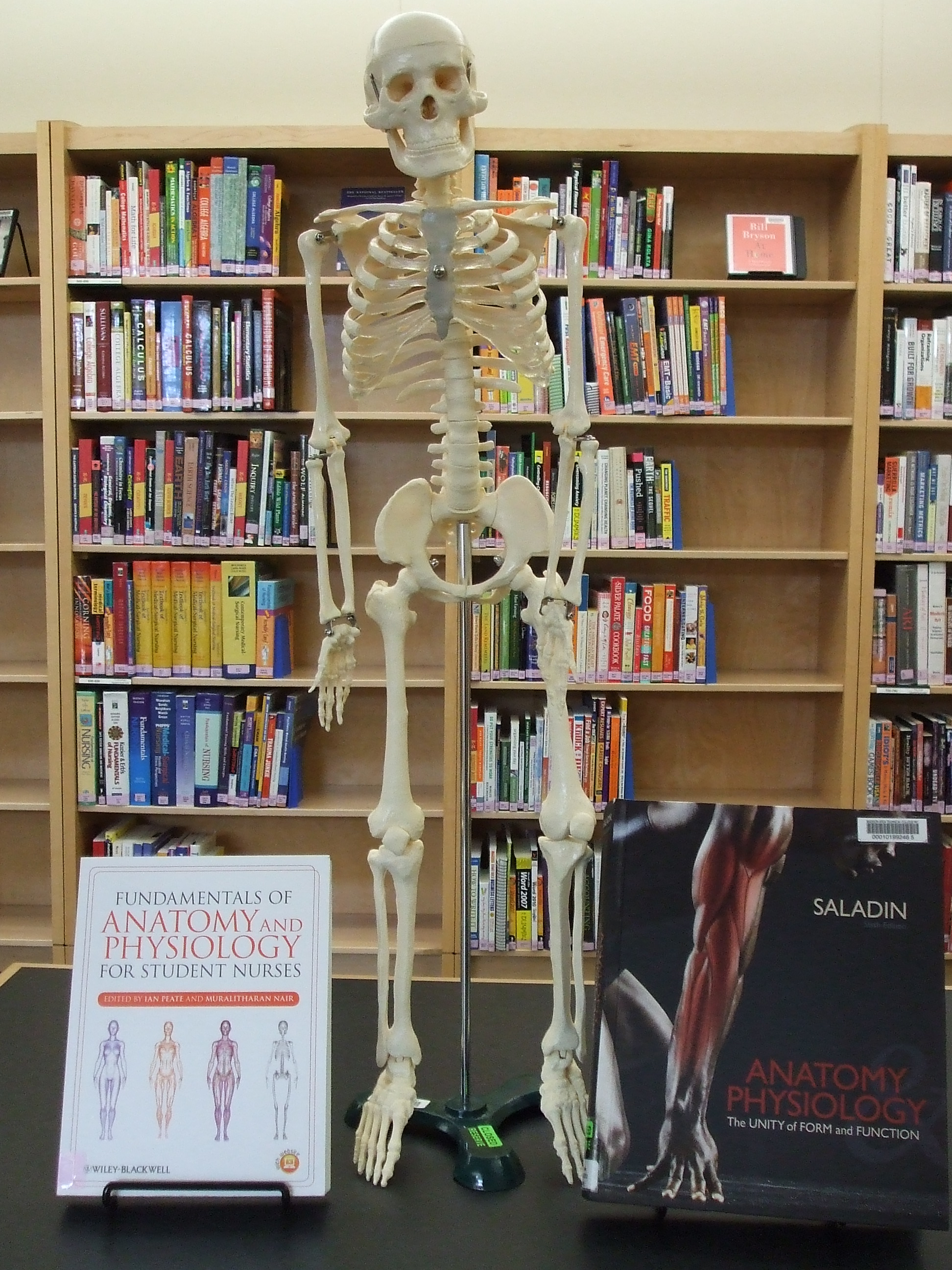 Model of skeleton in library