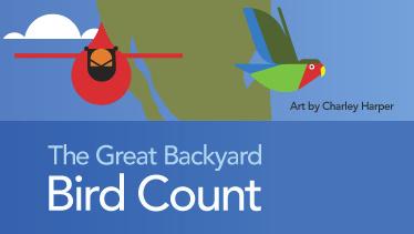 Virtual: The Great Backyard Bird Count