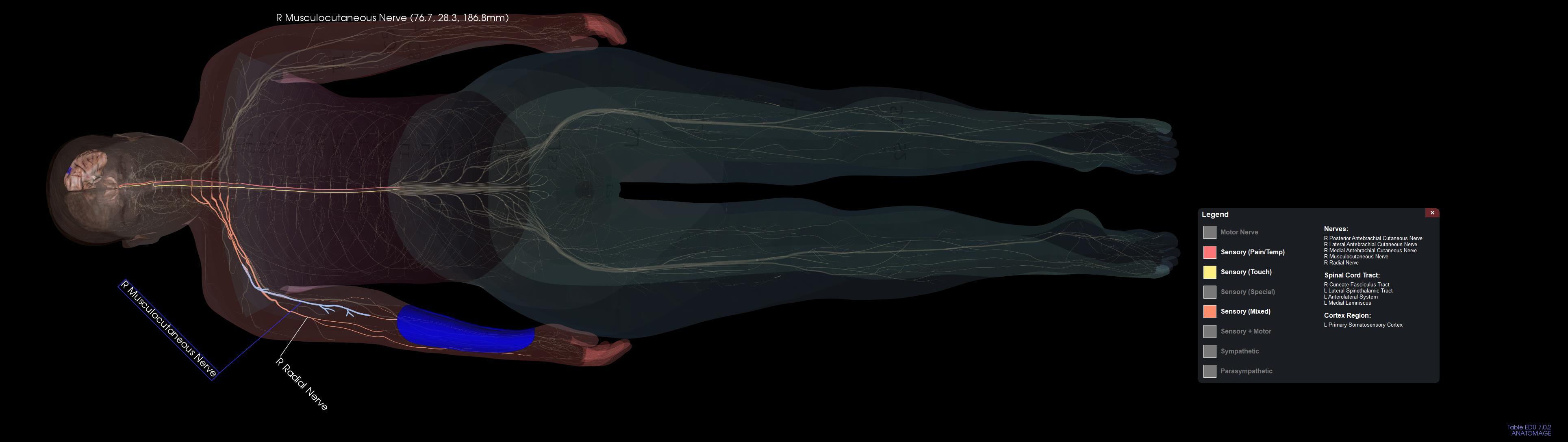 Nerve Pathways