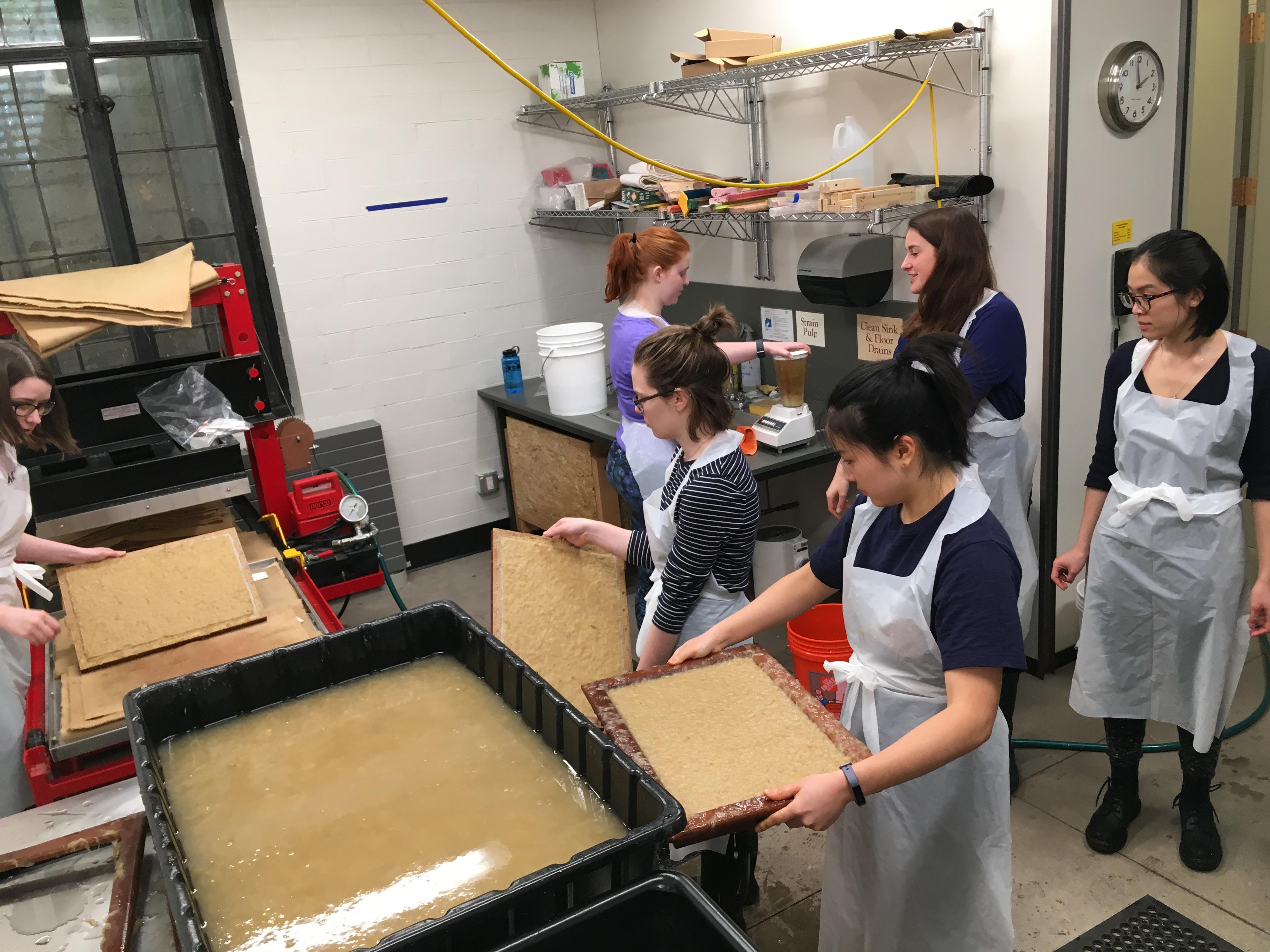 Phragmites Papermaking