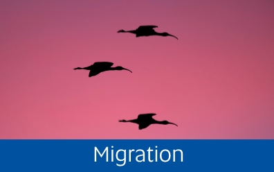 Navigate to the Migration page
