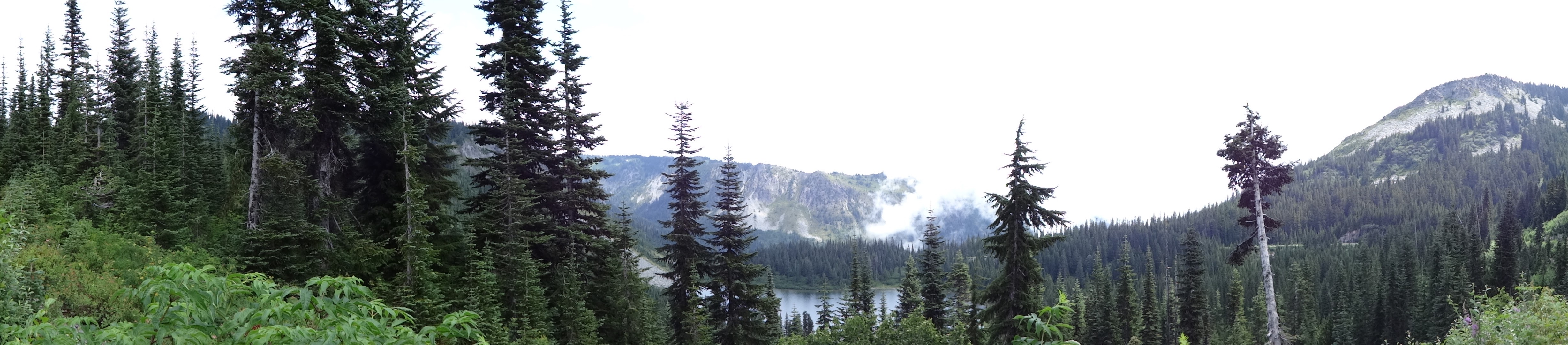 Metaphor for research disguised as a fog-obscured view of Mt. Rainier National Park