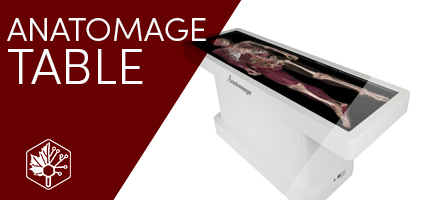 Digital Cadaver using Anatomage Table