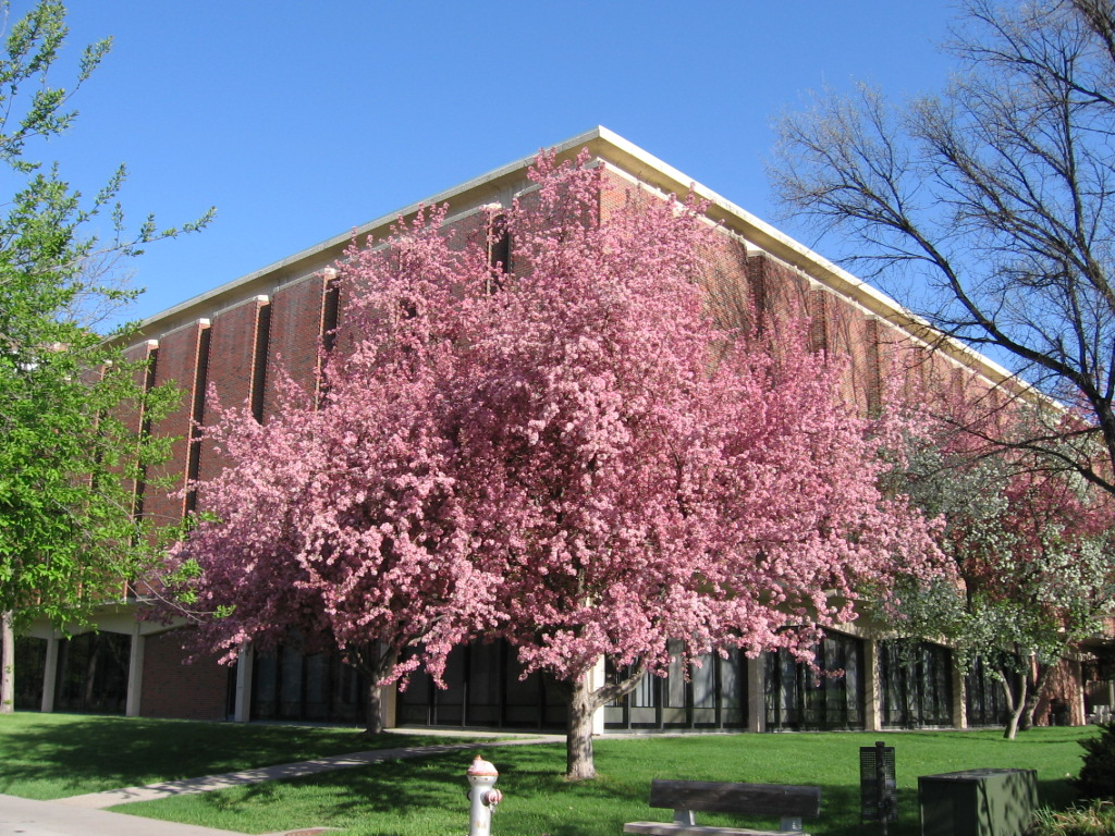 photo of the library building and blooming crab apple tree
