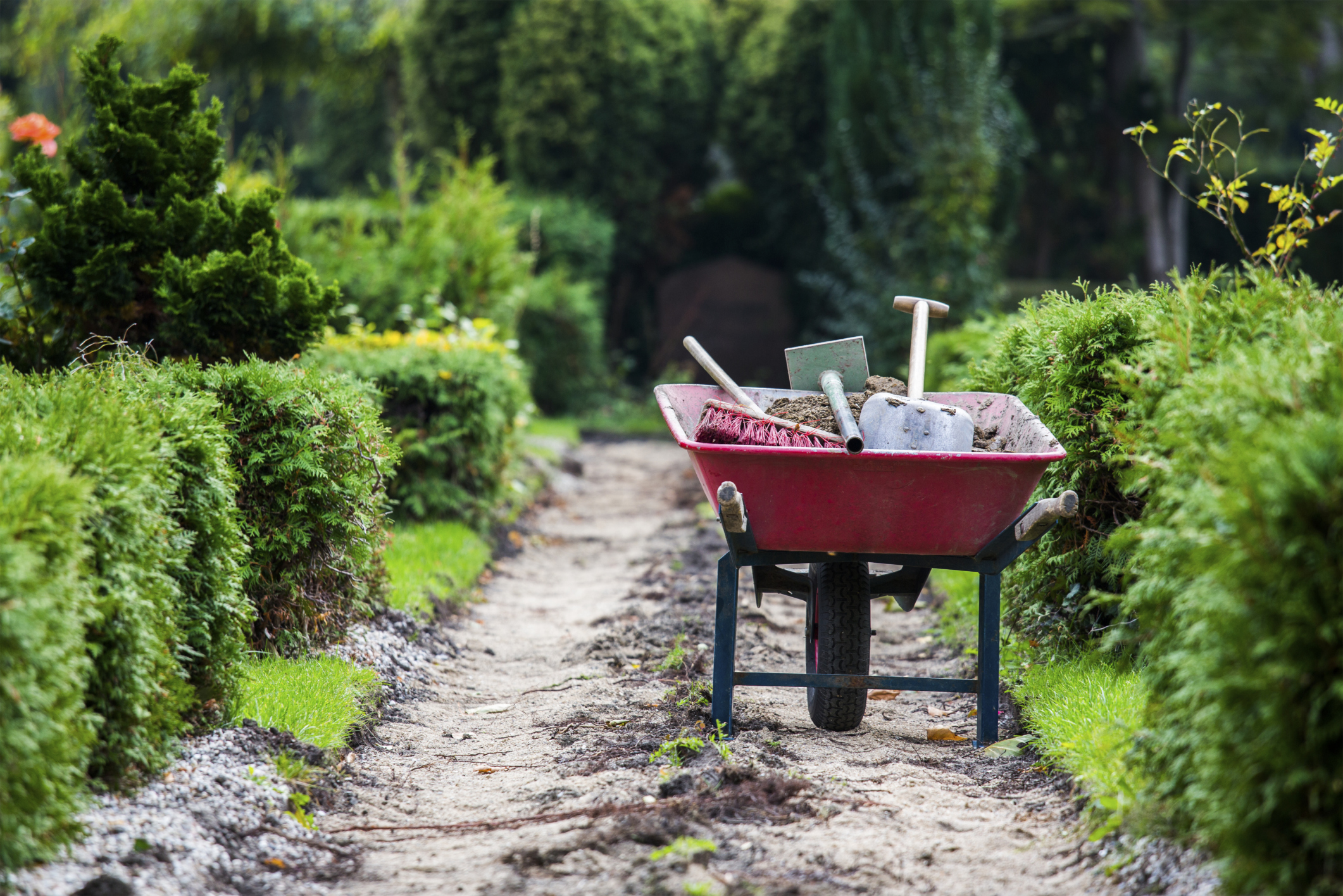 Garden Talks: Garden Therapy