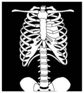 Decorative image of a torso x-ray
